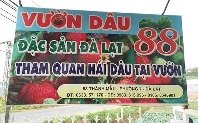 Vườn dâu tây tại Đà Lạt